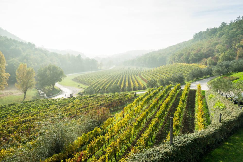 El sector vinícola está de enhorabuena