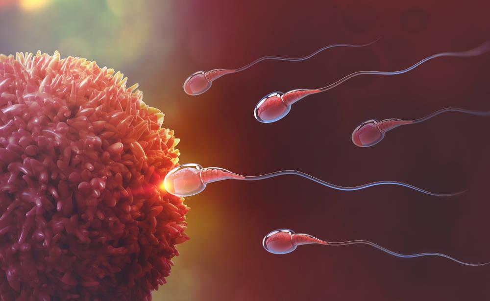 La reproducción asistida, toda una solución